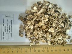 Sell dried mushrooms